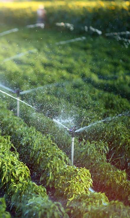 E & E Contractors LLC Irrigation System Repair