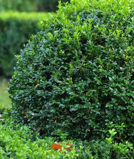 E & E Contractors LLC Shrubs & Hedges